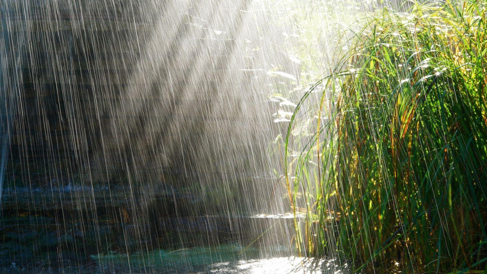 rain falling on flowers   Rain drops falling on plants ...