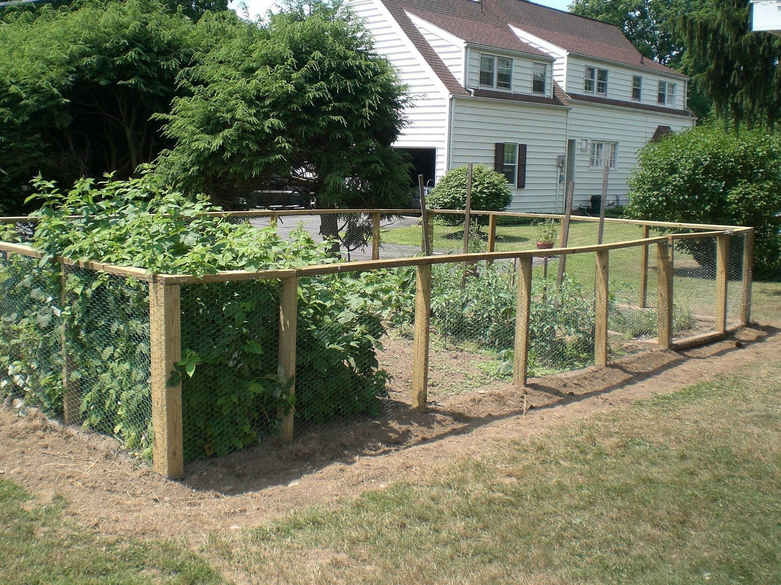 Veggie garden fence around chicken coop to keep dogs for Garden bed fence ideas