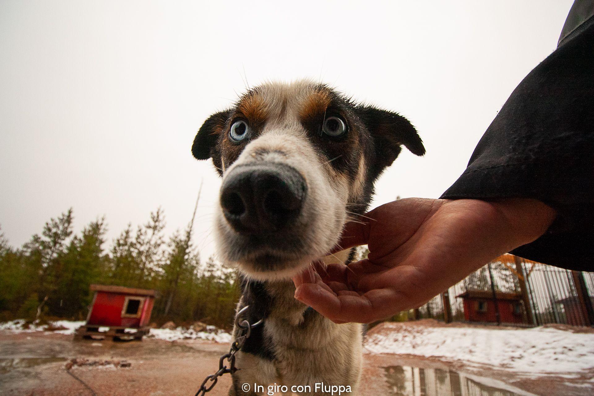Attivita Da Fare A Rovaniemi In Autunno Escursione In Quad Con Gli Husky Husky Rovaniemi Animals
