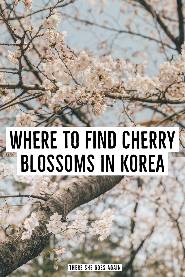 Cherry Blossoms Korea 2020 A Forecast Guide Where To Go Korea Travel South Korea Travel Cherry Blossom