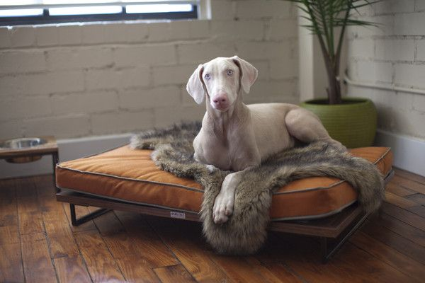 modern dog furniture. Modern Pet Furniture That Will Look Great In Your Home Dog D