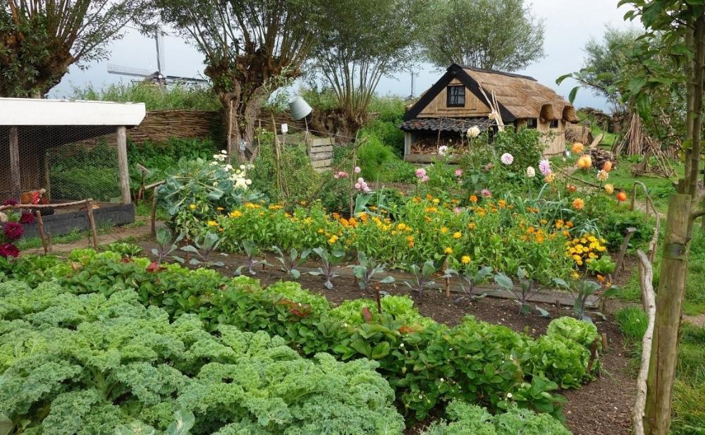 Jakie Rosliny Warto Sadzic Razem A Jakich Polaczen Unikac E Ogrodek Small Backyard Gardens Small Garden Plans Survival Gardening