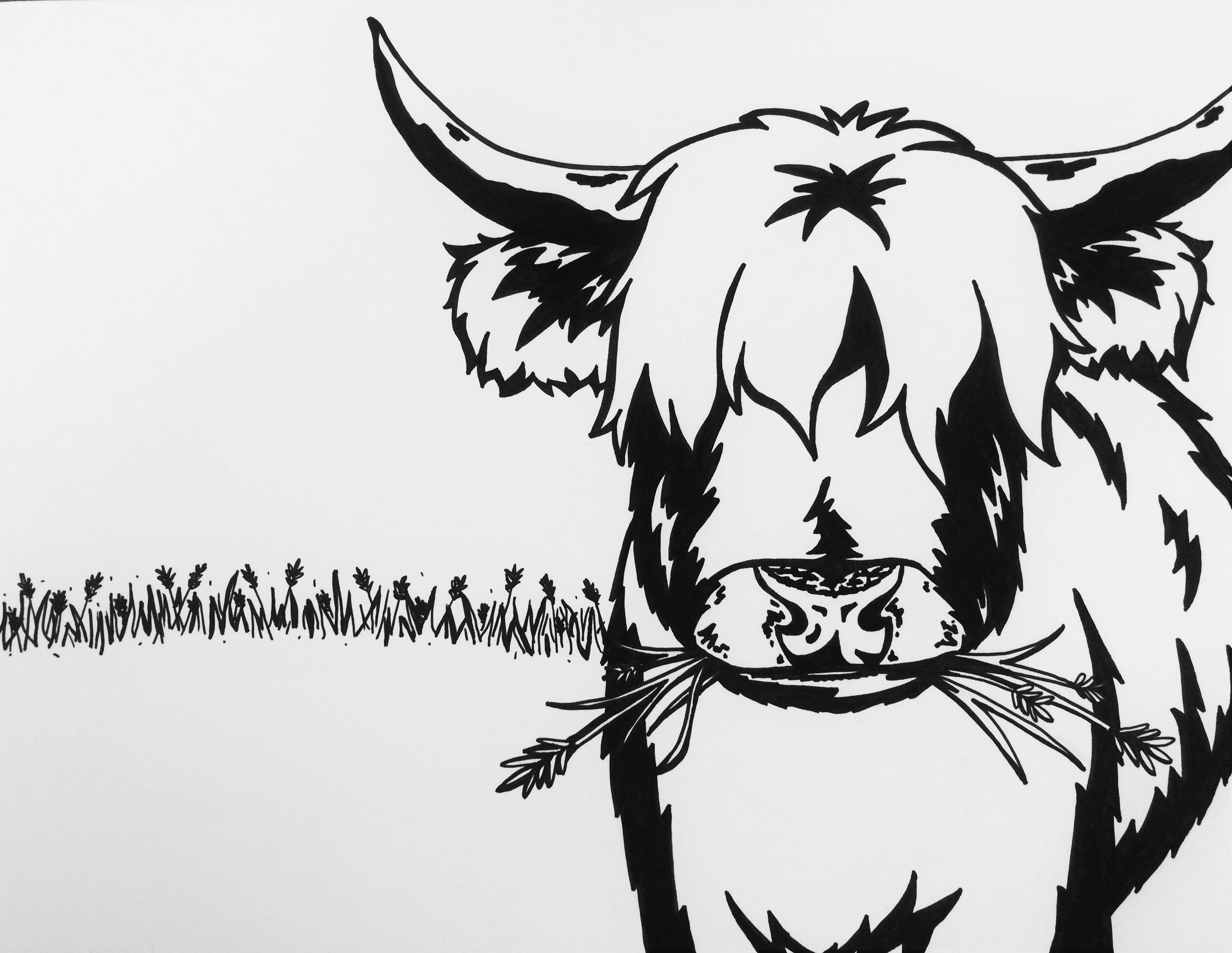 Highland Cow Coloring Page Sharpie Cow Coloring Pages Highland