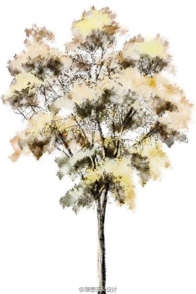 水彩风格的手绘树4 Tree Photoshop Watercolor Trees Tree Sketches