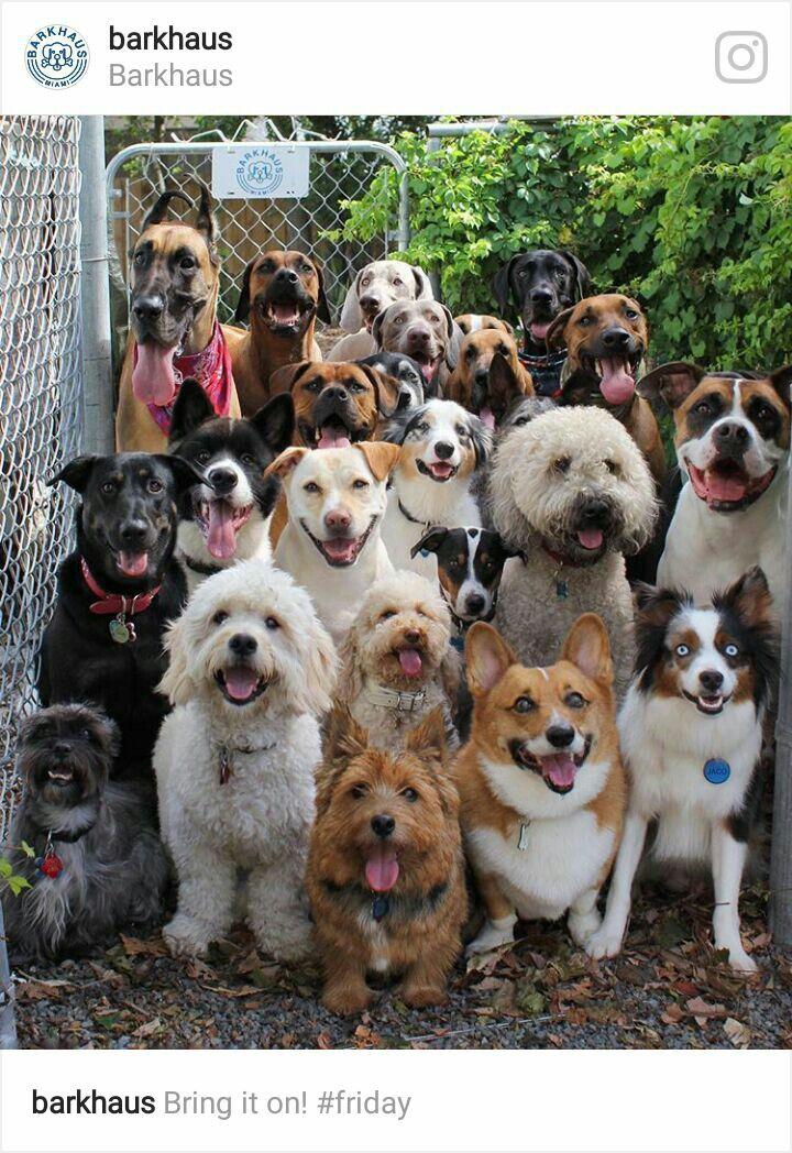 Tiere Bild Von Petra Frick Tiere Hunde