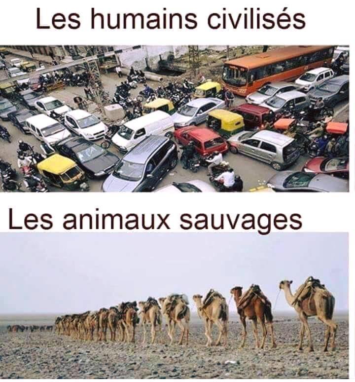 Les #humains civilisés / les #animaux sauvages !!! #blague #blagues #drole #drôle #humour #humours #rire