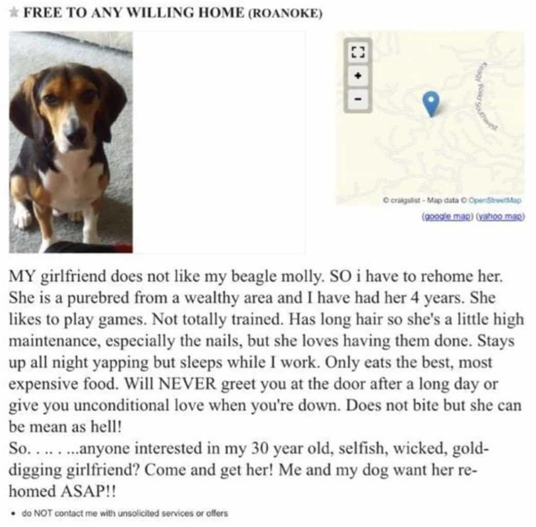 Great Dane Puppies For Sale In Va Craigslist