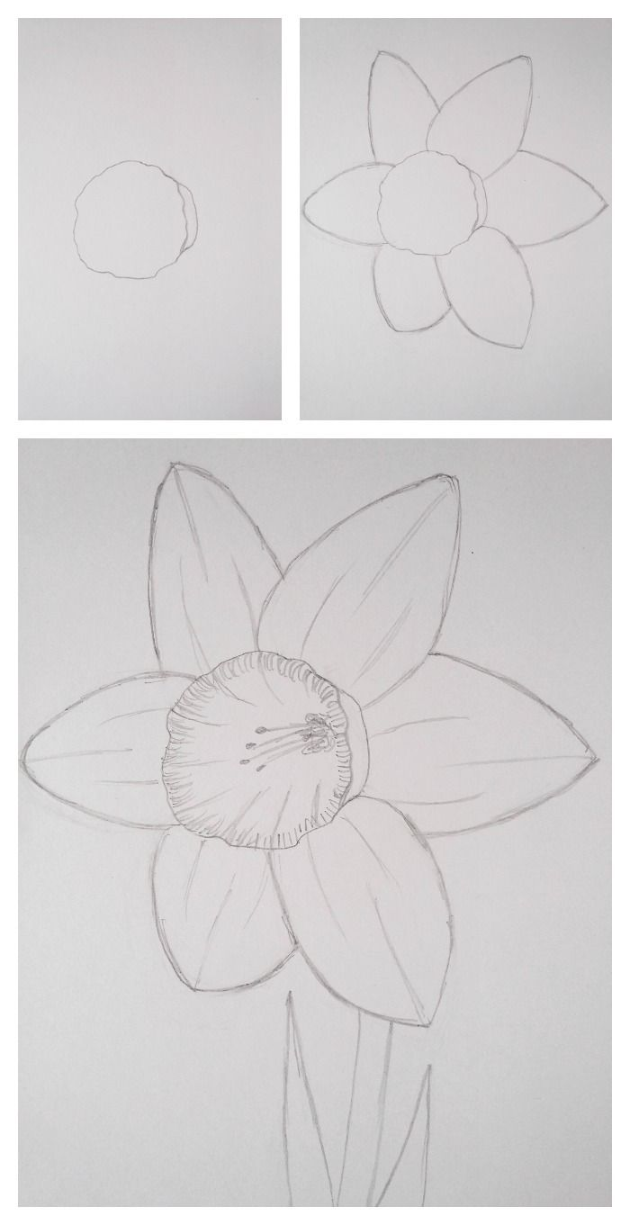 How to draw a daffodil yellow spring flowers spring flowers and