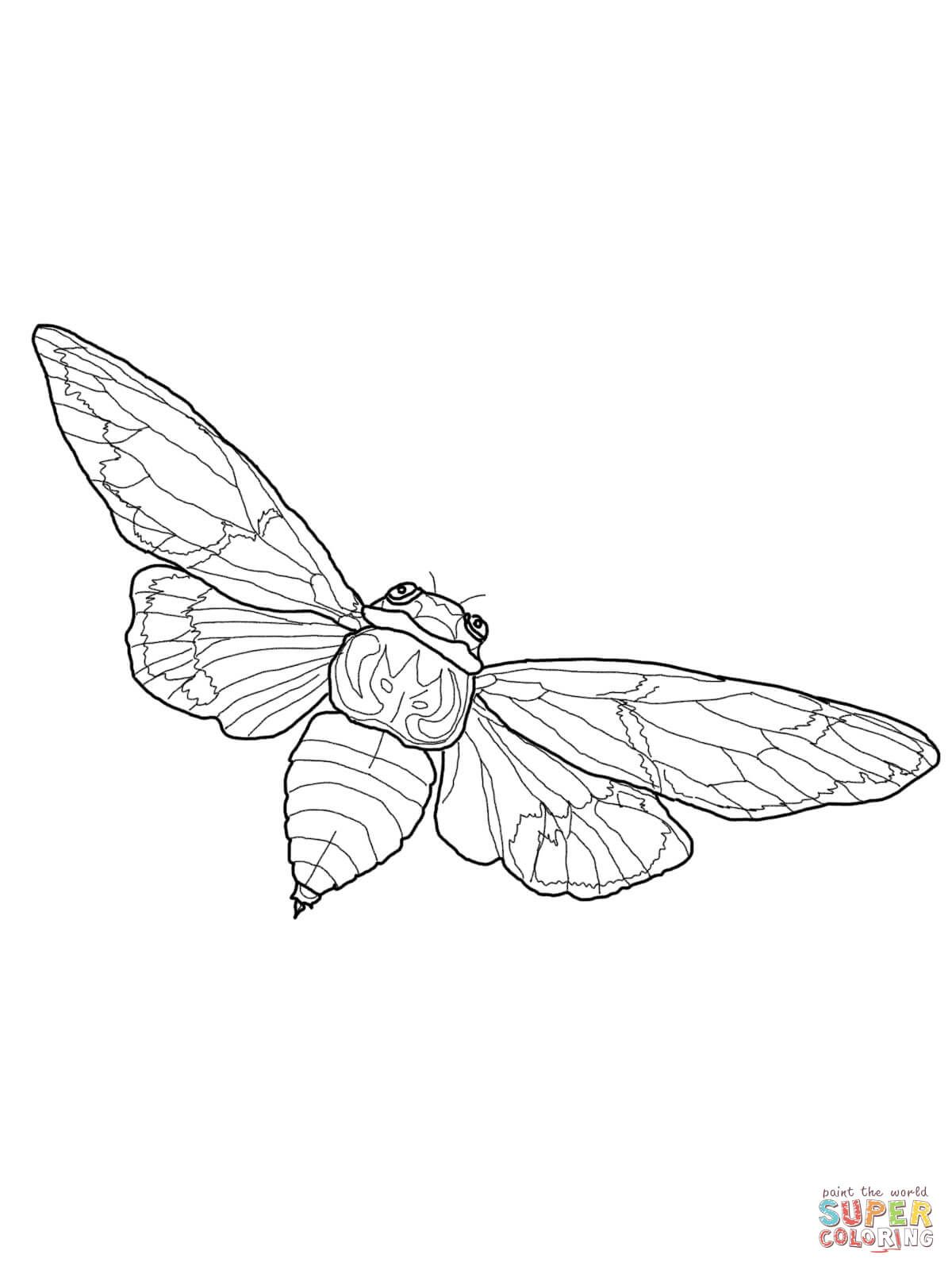 Flying Cicada Coloring Page From Cicada Category Select From