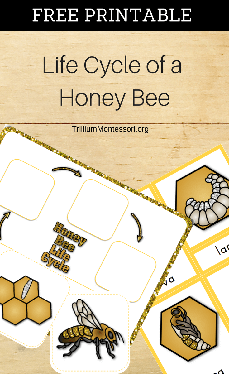 Free Resource Library - Trillium Montessori   Bee activities [ 1200 x 735 Pixel ]