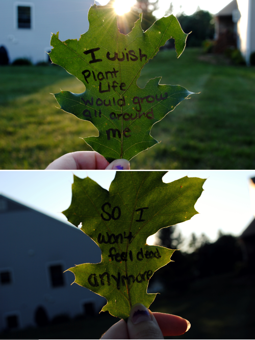 3 Owl City - Plant Life (I am going to do this on leaves and