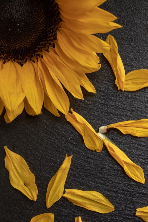 My Spring Fever Is Real Looking Forward To Basking In The Glory Of Allergy Inducing Pollen Remember That The Ant Green Beauty Clean Beauty Sunflower Seeds