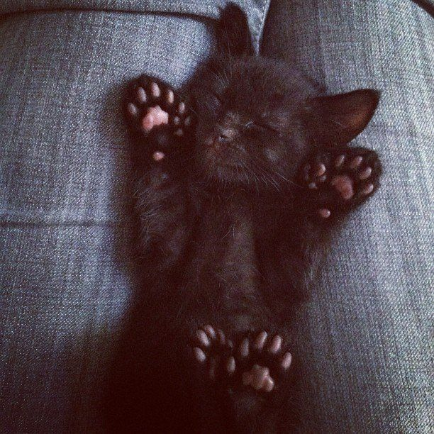 #cute #kitten with so many extra toes!