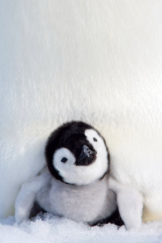 For my baby boy Vinnie....and his love for Toby - his penguin.