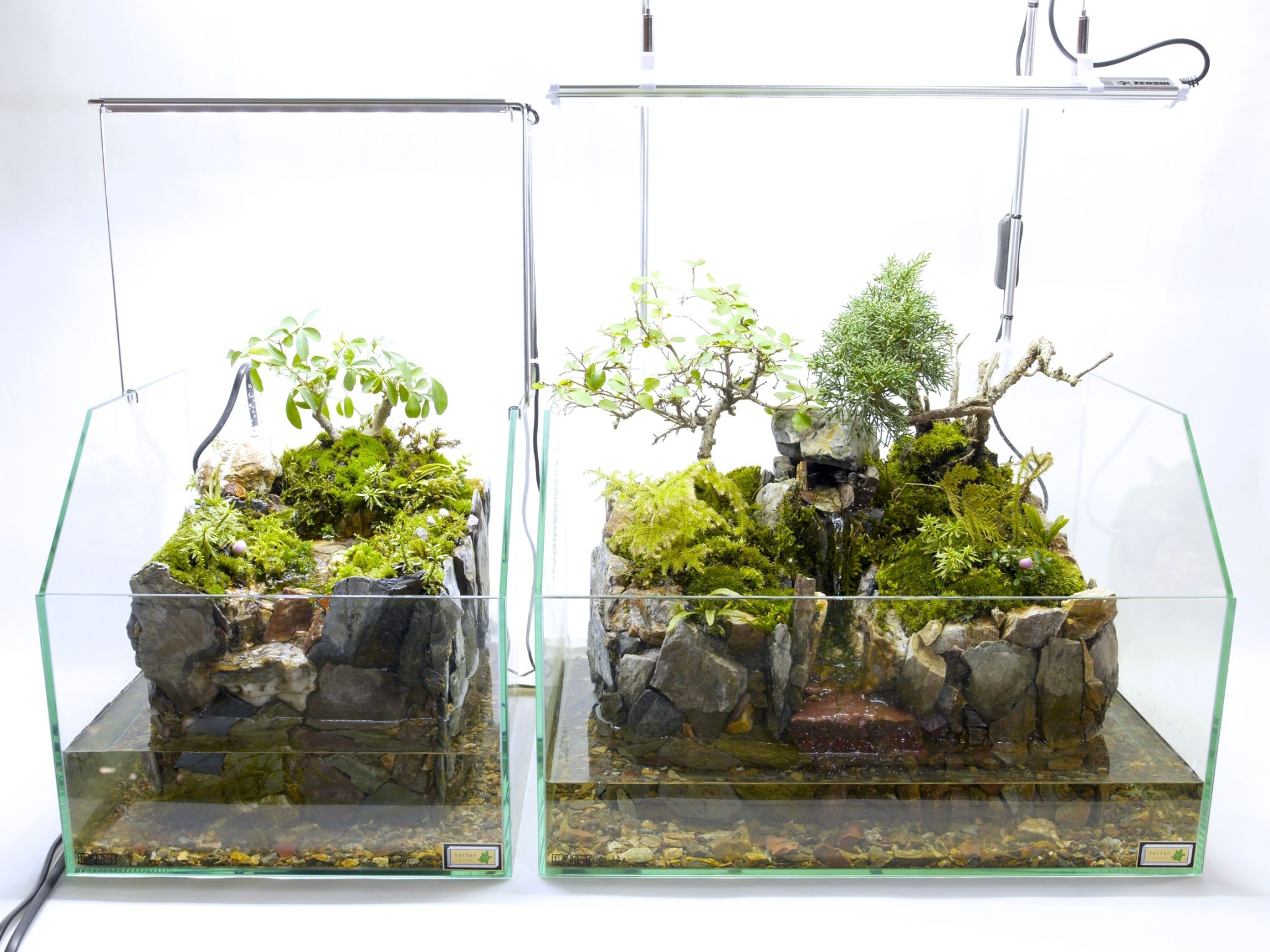 Pin by lukáš wicha on terrariums mosses etc in pinterest