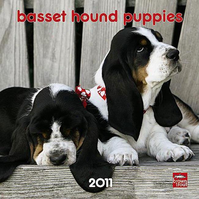 Black White Miniature Basset Hounds Basset Hound Puppy Miniature Basset Hound Basset Hound
