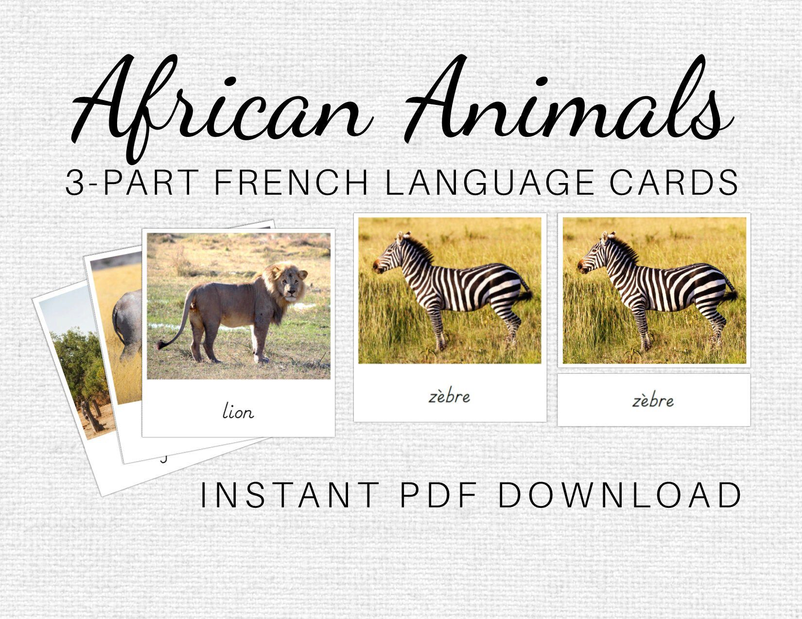 French African Animals Montessori 3 Part Cards Digital Download African Animals African African Wild Dog