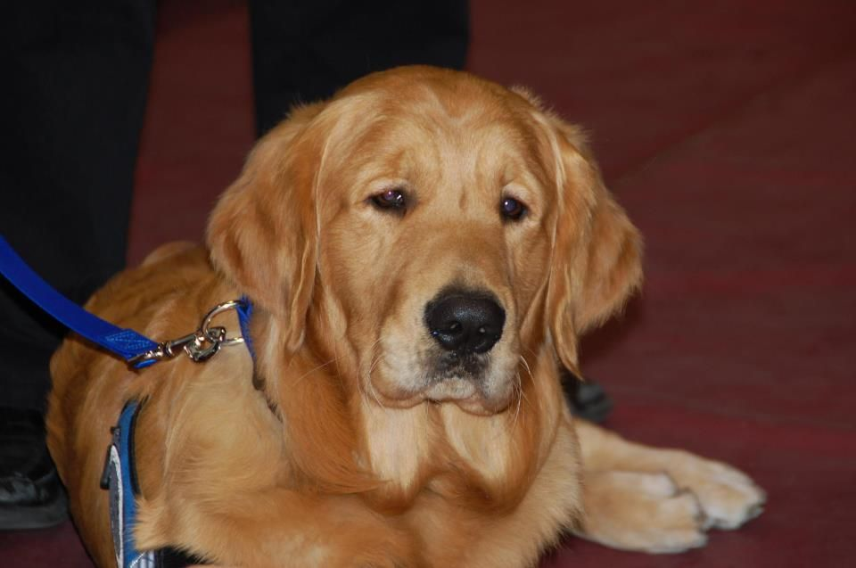 Luther Comfort Dog K9comfortdogs Dogs Luther Comfort Dog