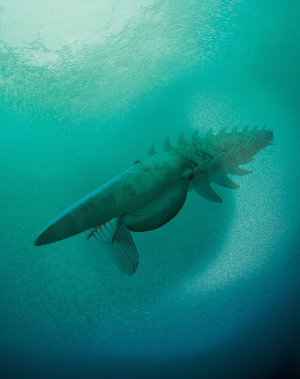 An illustration of the anomalocaridid (Aegirocassis benmoulae), a giant filter feeder that fed on plankton and lived in the Early Ordovician about 480 million years ago. The animal measured about 7 feet (2 meters) in length, and is one of the largest arthropods that ever lived.