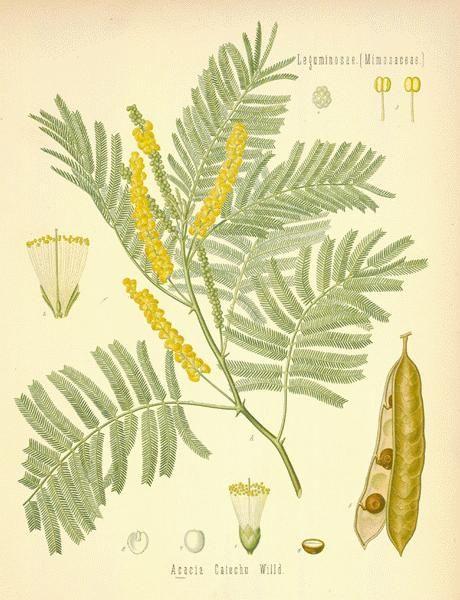 Pin On Herbal Botanical