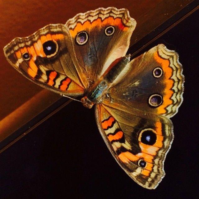 Mientras ella se acerca.... Otras vuelan ! #butterfly #colorsplash #angelconesa