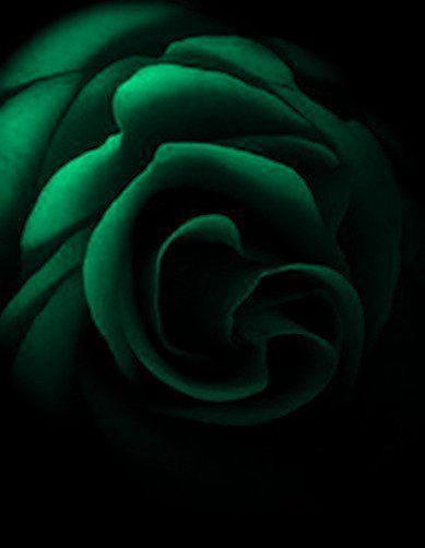 Emerald Green Flower on Black Background. J     d S  v             City G rl Jess ca   Pinterest