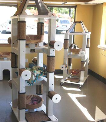 Judging Capacity For Communal Cat Rooms