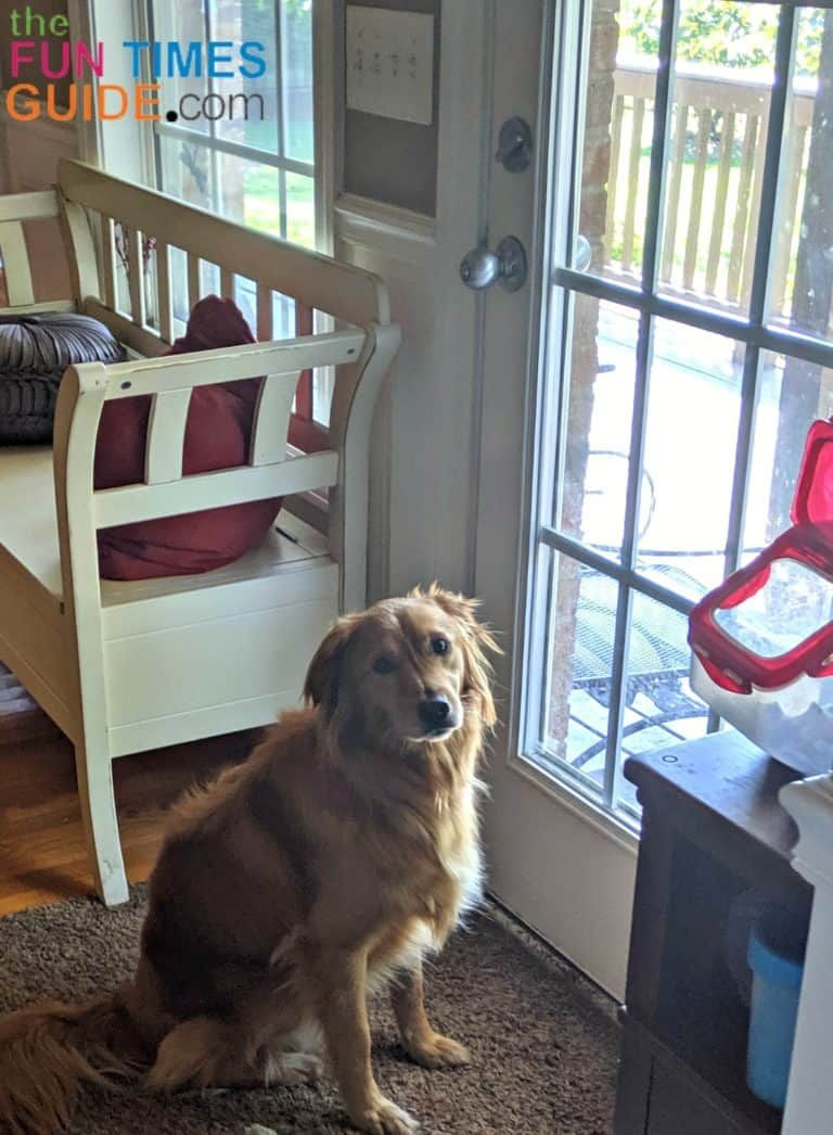 A Dog Routine For New Dog Owners Why How To Come Up With A Puppy Feeding Schedule And Potty Routine For Your Dog In 2020 Dog Potty Training Puppy Training
