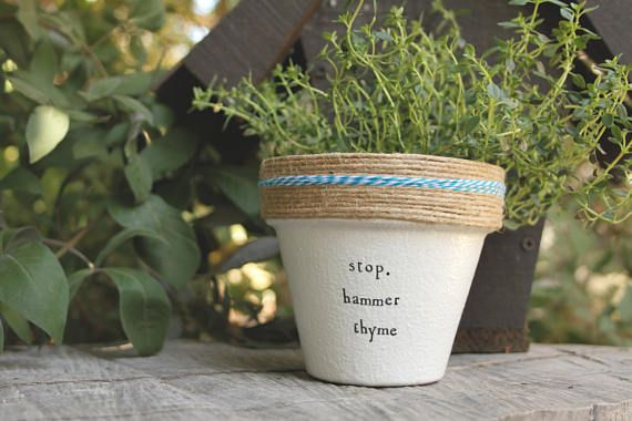4 Hammer Thyme » Thyme Plant Indoor and Outdoor Pot or Planter ...