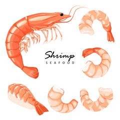 Collection boiled shrimp, shrimps without shell, shrimp meat. Shrimp prawn icons set. Boiled Shrimp drawing on a white background. - Buy this stock vector and explore similar vectors at Adobe Stock