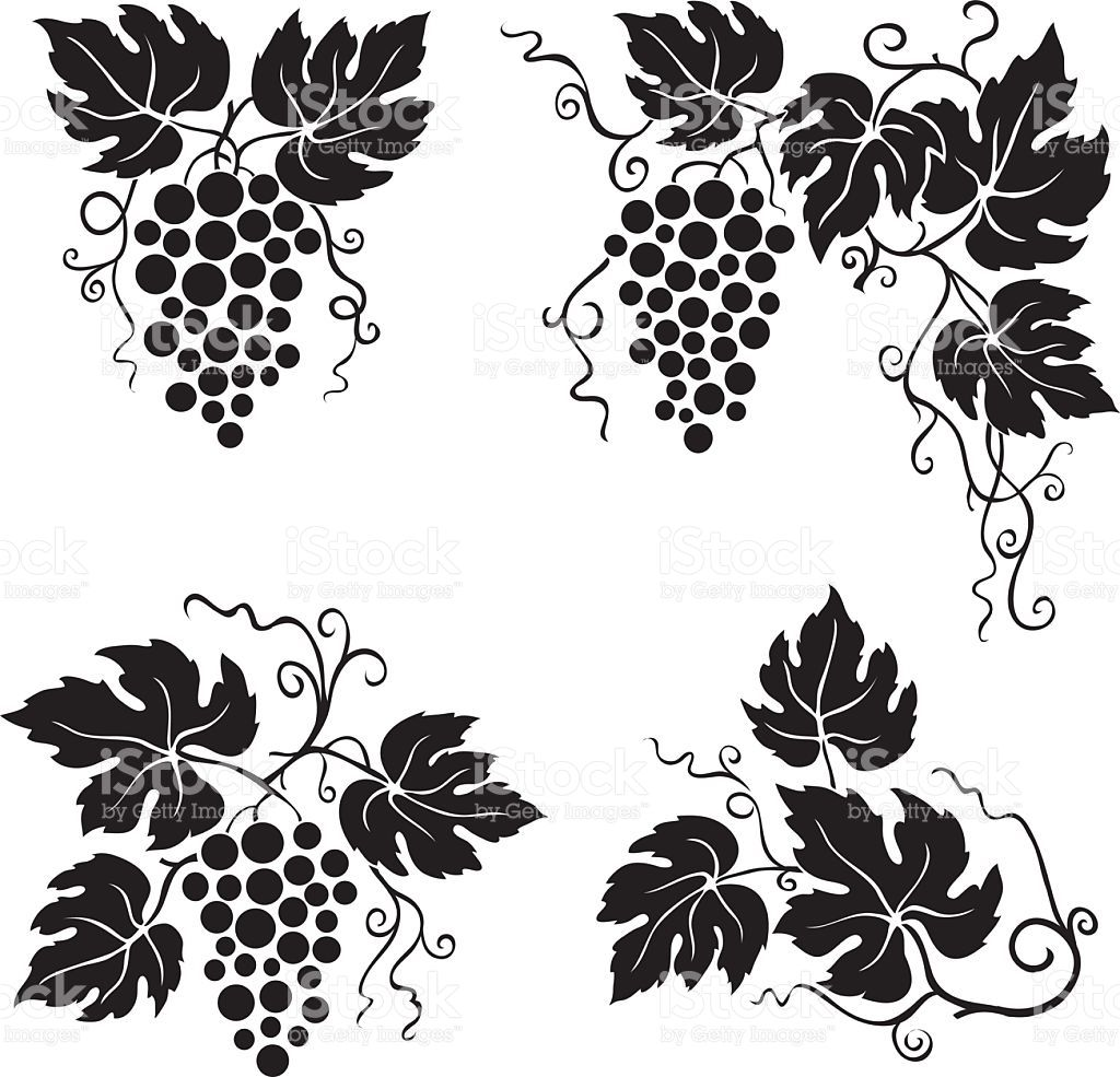 Related Image Leaf Clipart Grape Leaves Grapes