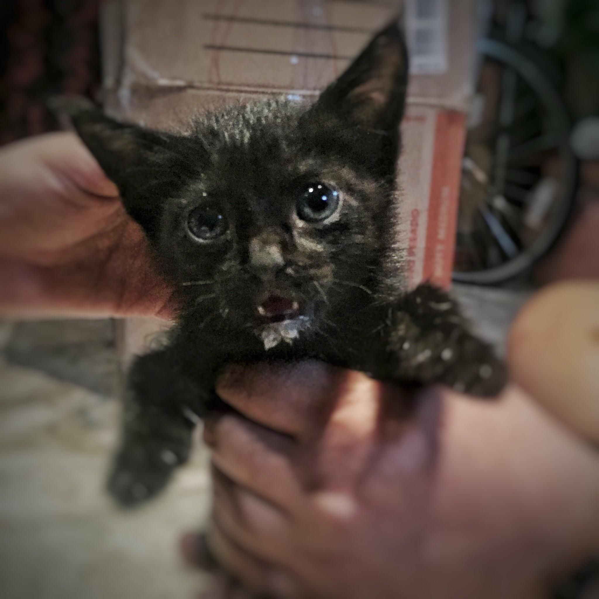 My Six Year Old Brought Home This Stray Kitten Yesterday Her First Rescue She Calls Her My Sprinkles Http Ift Tt 2jbceon Kitten Cute Cats Aww