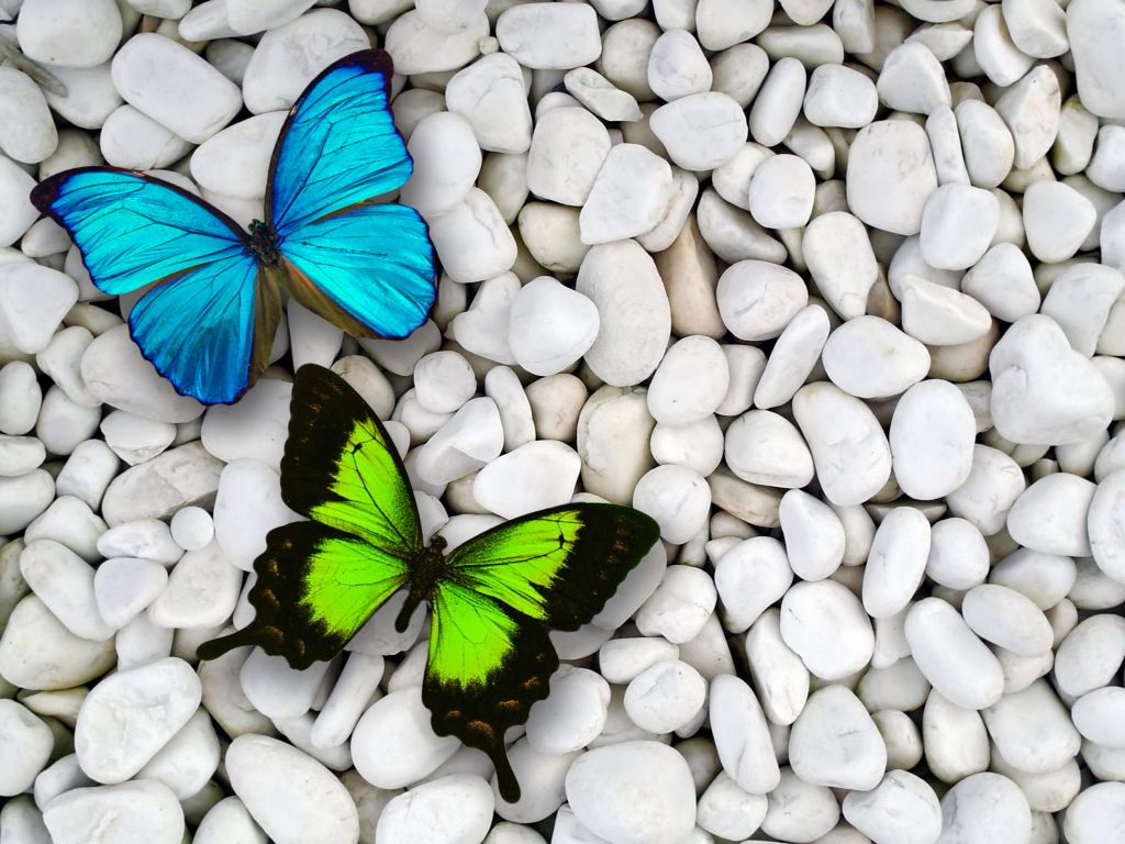 Butterfly Backgrounds | Flowers butterflies Wallpapers Pictures ...