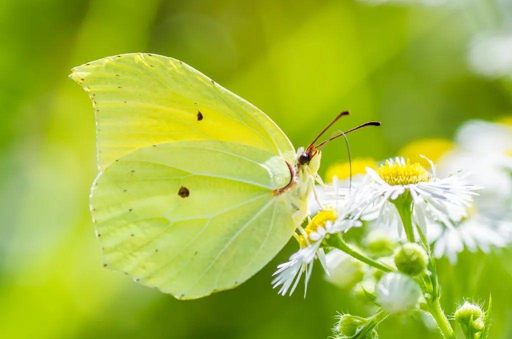 Pin Von Christine Potocar Auf Butterflies Moths Mit Bildern Schmetterling