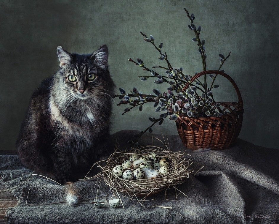 Прикольные картинки спящей кошки горами весна