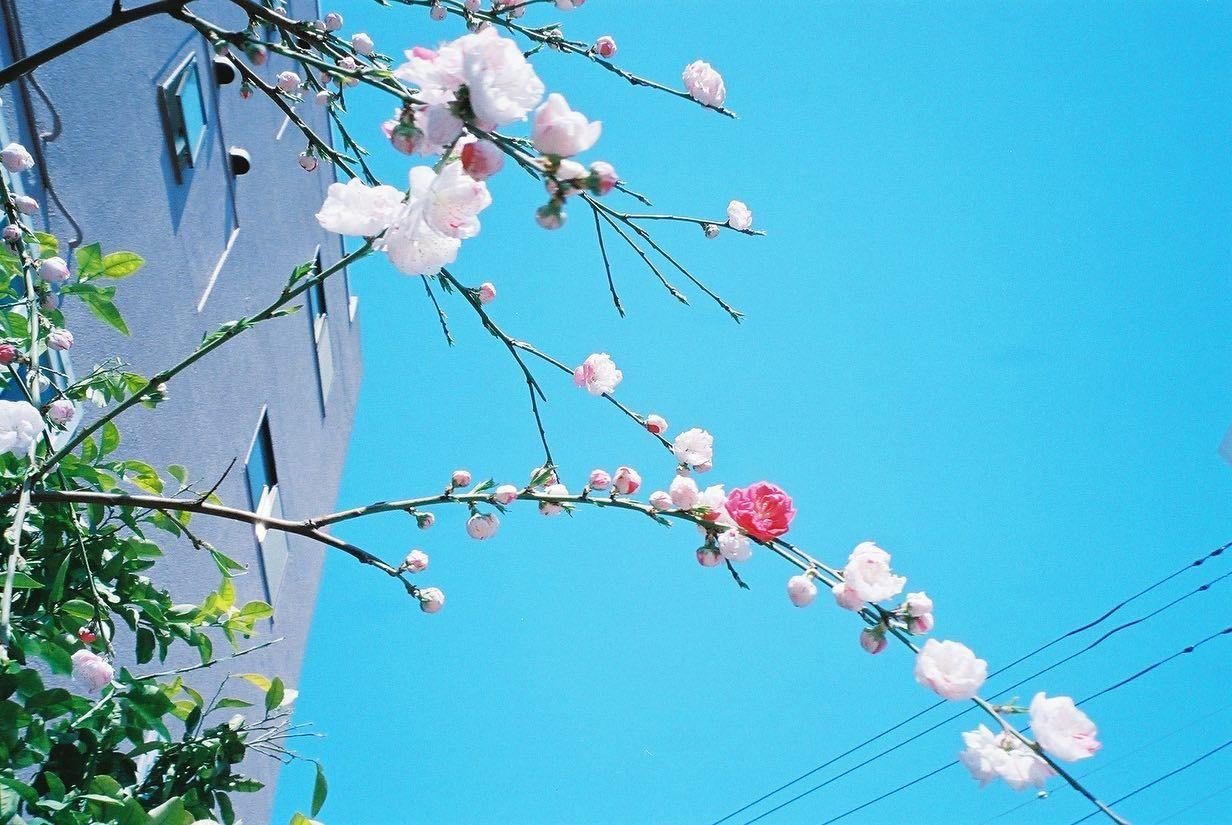 春の青色  春が来ると年を重ねている実感がすごくあって、得たものも失くしたものもすべて抱えて前に進まなくちゃなって思う時期である。  元来、なかなかなものぐさで面倒くさがりで新しいことを始めるのが苦手(続けるのも苦手)な私だけど、桜の季節だけはとっても前向きに新しい一歩を踏み出そうと試みたりする。  でも、結局は次の春までに続いているものなんて、少なくて振り返ってみると私が続けられているものなんて写真くらいしかないなって思う。  だから、季節を感じられる写真を撮るのが好きなのかもしれない。  なんでかな。いつも桜の写真を撮り損ねる。春って本当に一瞬だ。  今年はたくさん春を撮れそうで嬉しい。やっぱり季節を感じられる写真を撮れるのは嬉しい。  いつか私の春の写真を見て、同じように前に進める人がいてくれるといいな。  #フィルムカメラ #フィルムカメラに恋してる #フィルム写真 #コンパクトフィルムカメラ #コンパクトフィルムもなかなか性能良い #桜と青空 #フィルム写真普及委員会 #新生活スタート #新生活応援 #私らしく