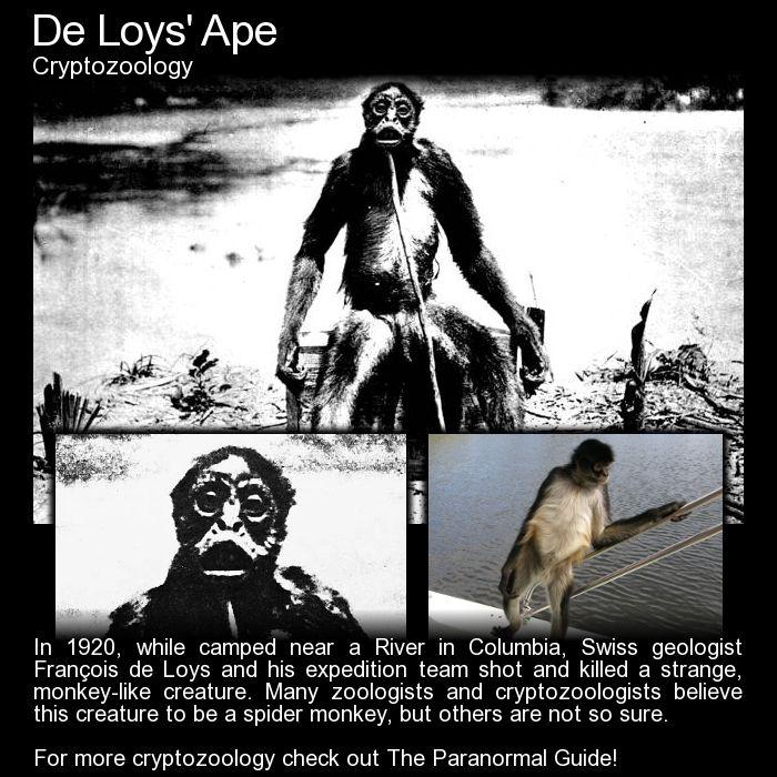 De Loys' Ape: http://www.theparanormalguide.com/blog/de-loys-ape