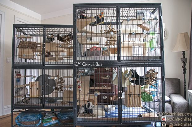 Ferret Nation Cages For Chinchillas Pros And Cons Ferret Nation Cage Chinchilla Cage Ferret Cage