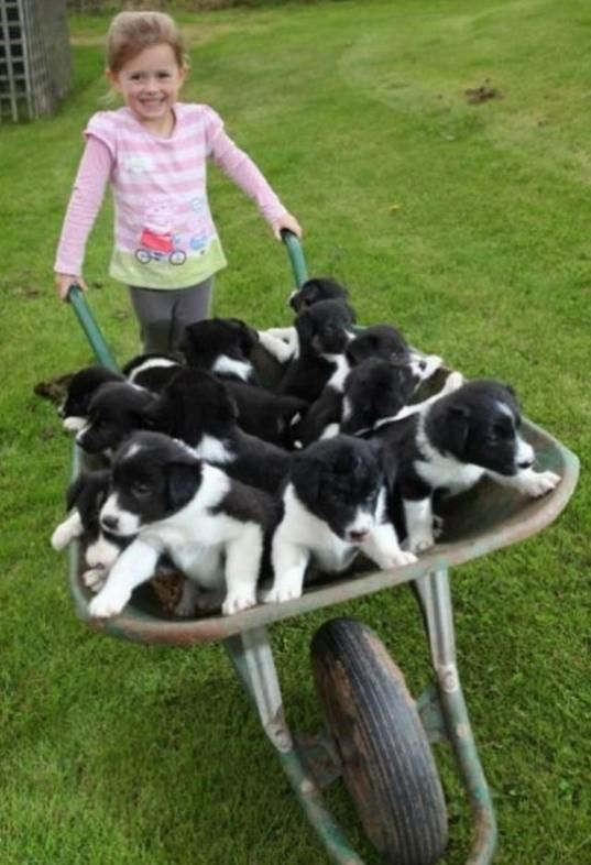 Wheelbarrow full of happiness