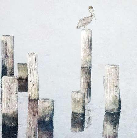 Perched Pelican