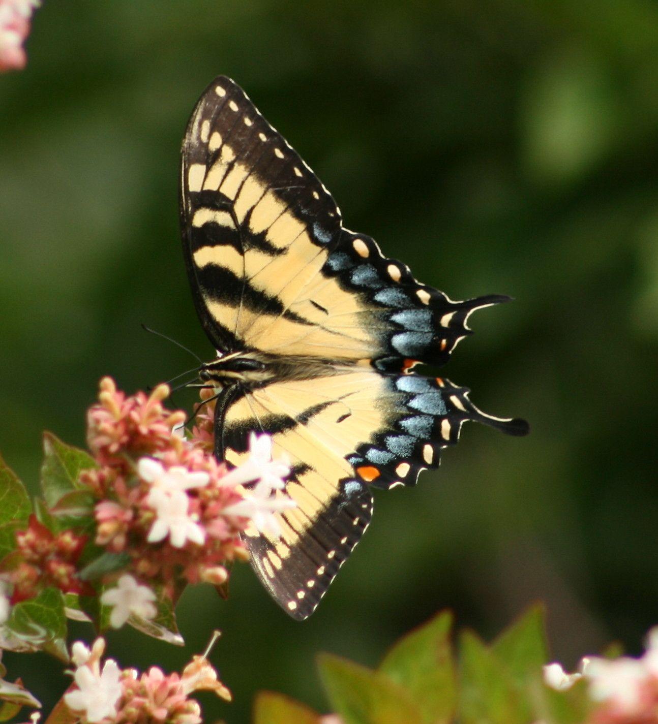Butterfly At Atlanta Botanical Garden