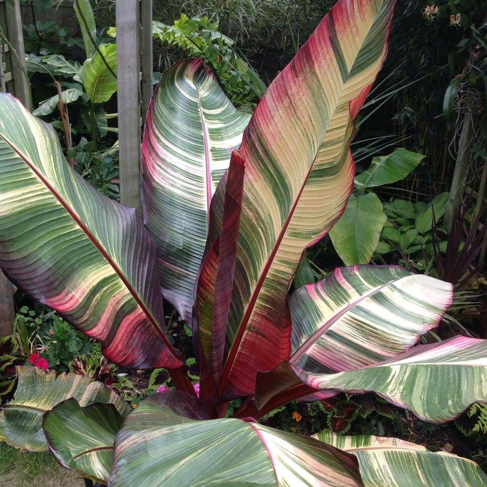 Pin on tropi&exotic plantas