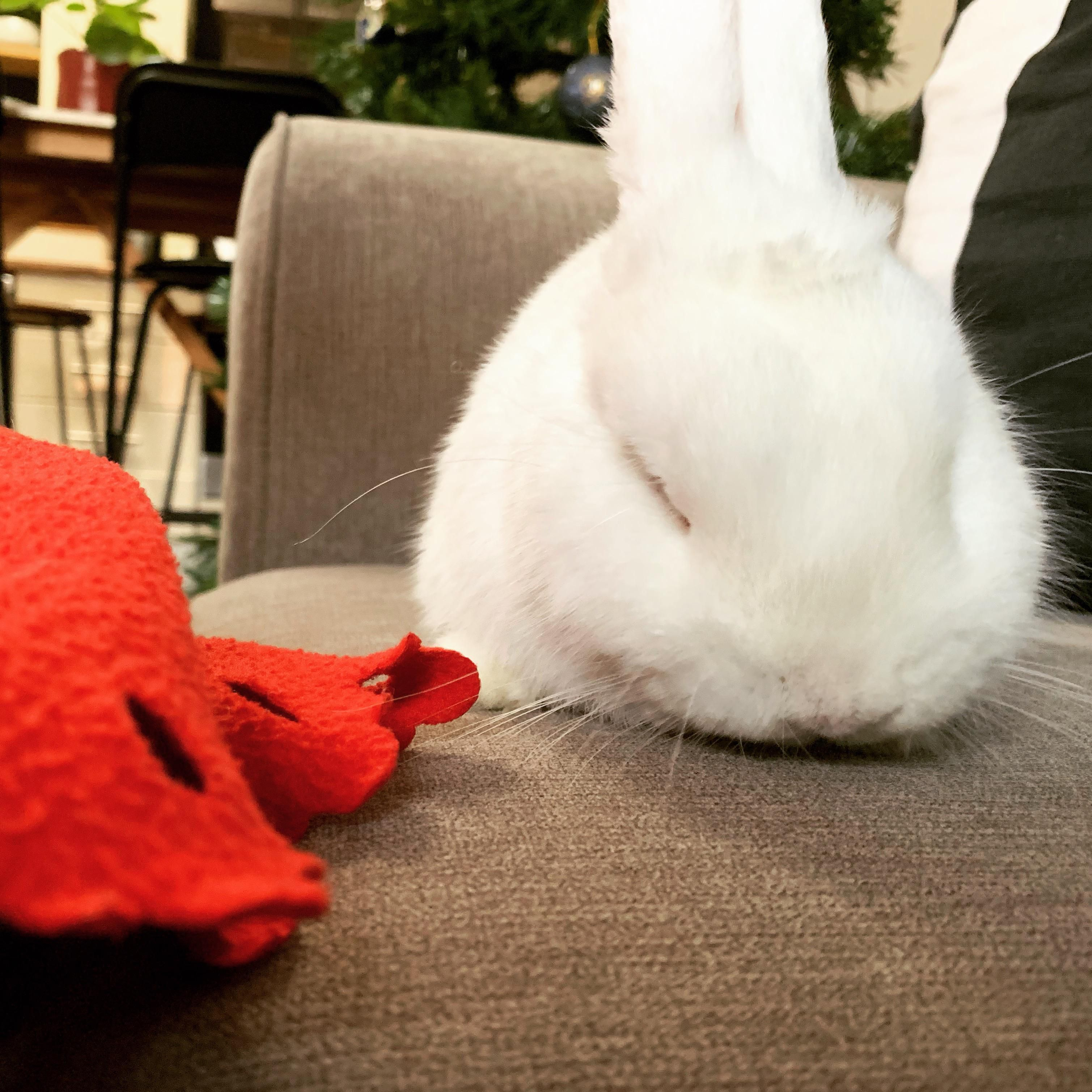 Things You Need To Know Before Buying A Rabbit Rabbit Care Rabbit Playpen Rabbit Behavior