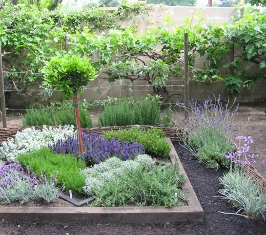 Back Yard Potager: How To Make An Herbal Knot Garden