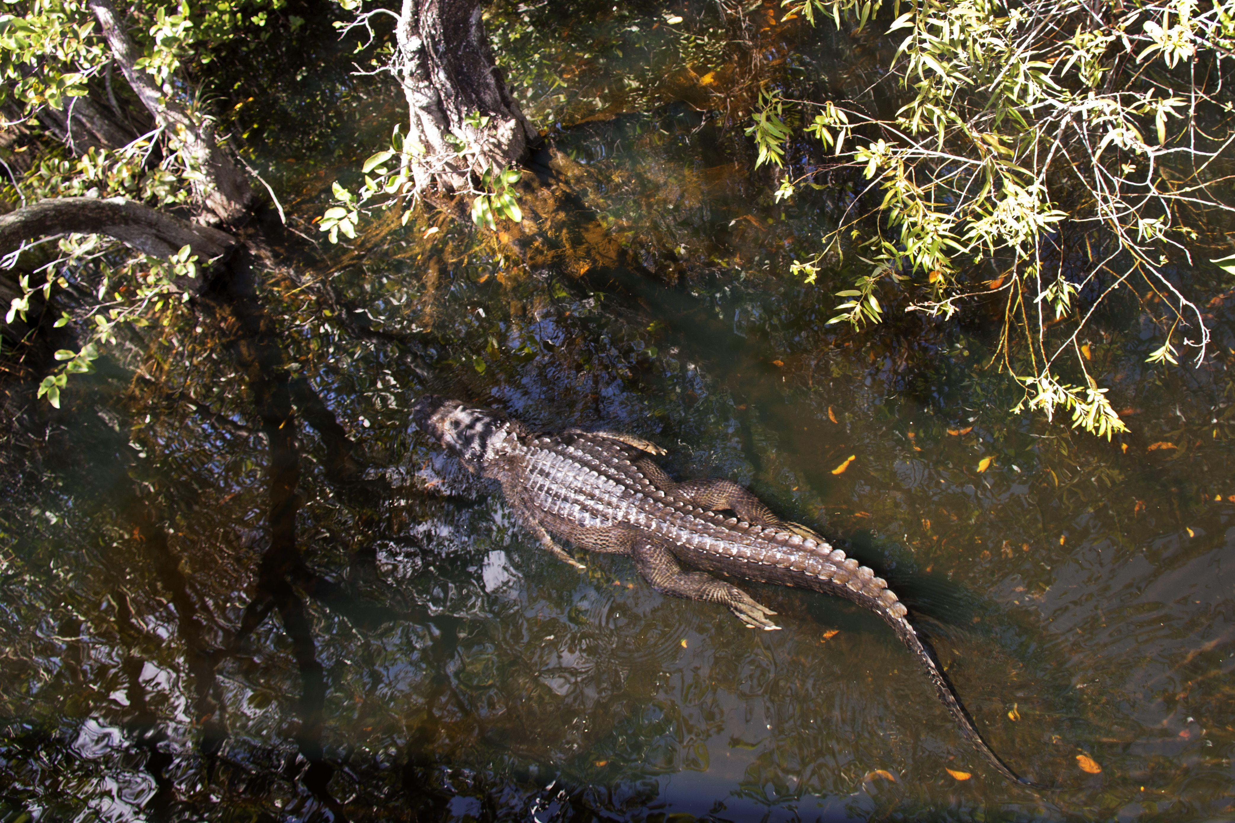 Florida - Everglades boy ____  more @ nw7.eu
