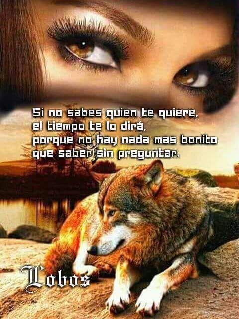 Resultado De Imagen Para Lobo Frases Fraces De Animales