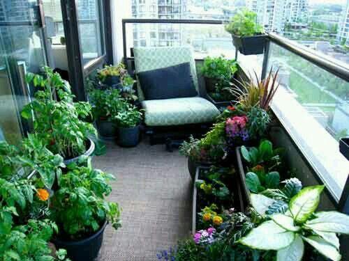 Pretty garden 4 apt/condo living~ | Balcony and Rooftop Gardens ...