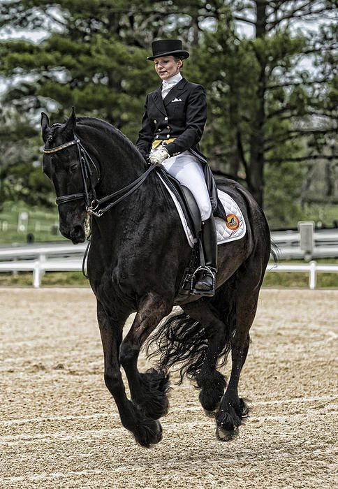 """""""Sky dancing"""" ...all four hooves are off the ground...Brings back memories of dressage & hunter jumper trials in Santa Barbara, CA."""