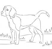 Раскраска Собака (с изображениями) | Рисунки для ...