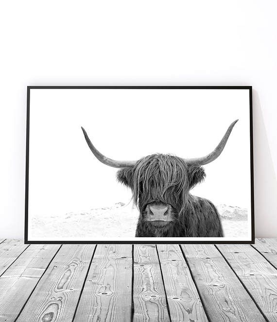 Animal print wall art prints highland cow print black and